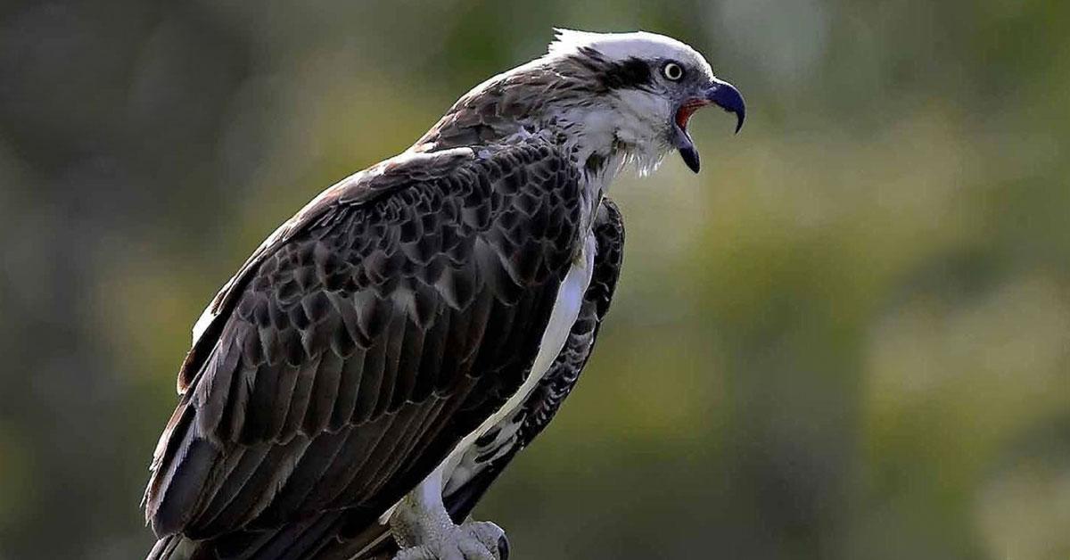 Living with birds of prey
