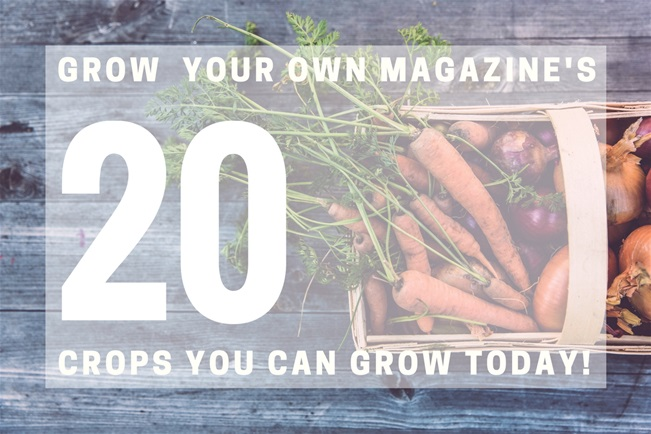 Grow Your Own magazine's 20 Crops You Can Grow Today!